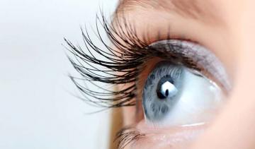 evolucion_de_los_ojos